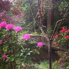 The beautiful pond area at Redwood Christian Park.  #redwoodchristianpark