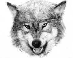 225 Best WOLVES 2- DRAWING AND PAINTING images in 2017 ...