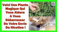 Voulez Vous Arrêter De Fumer? Cette plante annihile Instantanément votre...