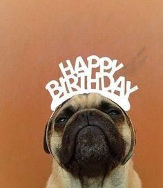 Because he looks super adorable wishing you a happy birthday. - Happy Birthday Funny - Funny Birthday meme - - Because he looks super adorable wishing you a happy birthday. Cool Happy Birthday Images, Happy Birthday Quotes, Birthday Messages, Happy Birthday Cards, Birthday Greetings, Birthday Wishes, Birthday Pug, Animal Birthday, Birthday Memes