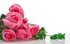 imagenes  | Rosas rosadas 4 fondos de pantalla, fondos de escritorio