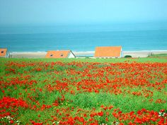 Rotterdam, Calais, Photos Voyages, Lone Wolf, France Travel, Wanderlust, England, Explore, Europe