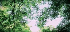 Image result for sky and tree