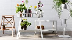 Grow plants vertically in the kitchen using a step stool, plant stand or cart!