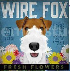 Wire Fox Terrier lovers.