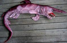 Tubarão duende é encontrado no Japão