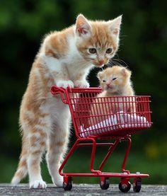 Cute kitten in a mini shopping trolley - Pictures - Cute - Stylist Magazine