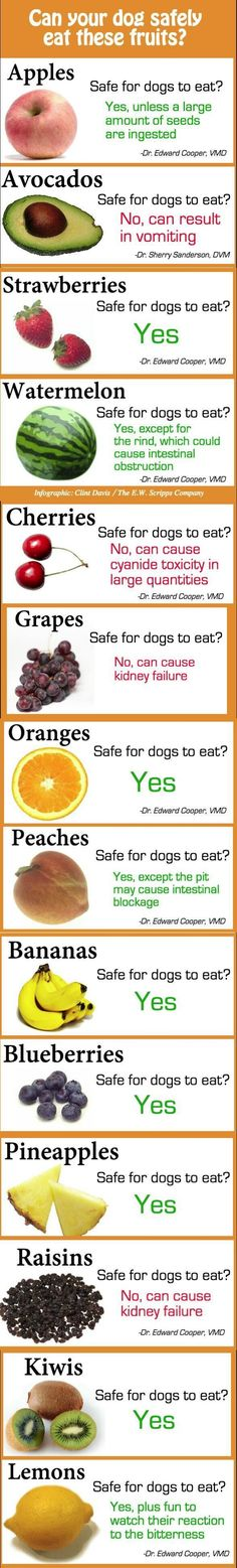 CAN YOUR DOG SAFELY EAT THESE FRUTIS? Ever wonder what summertime fruits you can share with your dog? Take a look at the list below from Marysville Veterinary Clinic (Marysville, Michigan).