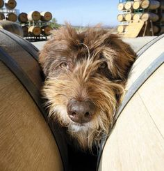 Hanging out between the barrels
