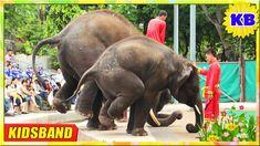 Children's Music Remix - Baby Elephant in DON Village - Best of Elephant...