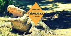 Voir des alligators sauvages dans les Everglades - 4 coins du monde