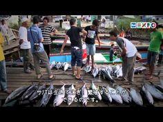 アンチョビの賞賛 市場で、大きな魚の代わりに「小魚」を買うのは、海の生態系を守るのに貢献することにもなる。今日アンチョビをたくさん買っておく方が、明日マグロ一匹も買わないよりいい。