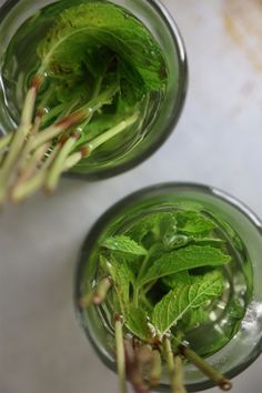 Mint Tea Recipe - I will be using this. My mint just started coming up!