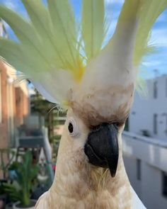 Funny Birds, Cute Birds, Pretty Birds, Cute Funny Animals, Cute Baby Animals, Cute Animal Videos, Cute Animal Pictures, Happy Animals, Animals And Pets