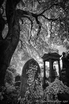 Welford Road Cemetery, Leicester. Photographer, John Houghton. (Victorians really understood the beauty of death. As a Victorian city, Leicester reeks of it...)