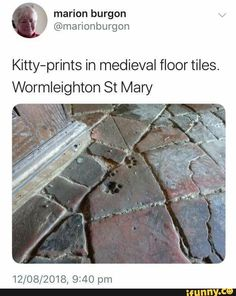 kitty leaves a mark ❤ Cute Funny Animals, Funny Cute, Cute Cats, Funny Pics, Hilarious, Crazy Cat Lady, Crazy Cats, Animals And Pets, Baby Animals