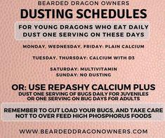 Fancy Bearded Dragon, Schedule, Dragons, Food, Timeline, Essen, Meals, Yemek, Eten