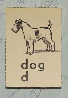 Dog .:. Flash card, circa 1960. My dog, Scottie, was a Wire-haired Terrier, just like in this pic.