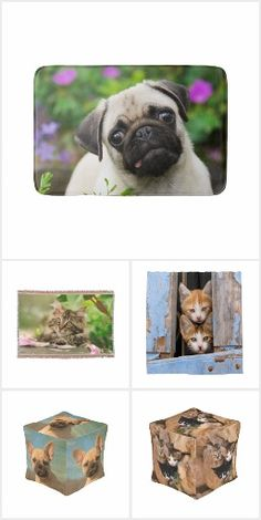 Home Ideas for Pet Lovers