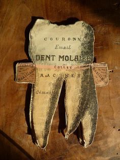 Vintage French Medical Anatomy Fold Out Doll Diagram Chart of The Human Tooth