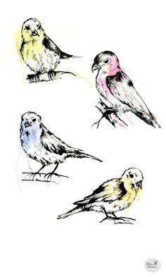 Watercolour and ink birds i designed for a tea towel