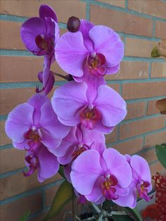 Orchidea Orchids Flowers Garden