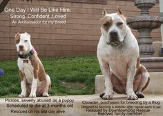 Educate, don't discriminate!  Learn the truth about Pit Bulls http://www.badrap.org/home