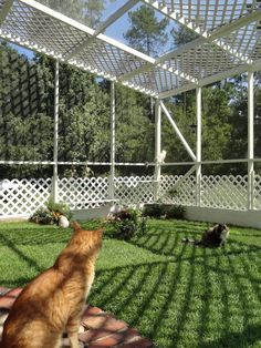 A huge outdoor enclosure is the pet pasture cats didn't know they neede