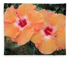 """Peach Hibiscus Fleece Blanket (50"""" x 60"""") by Phyllis Taylor.  Our luxuriously soft throw blankets are available in two different sizes and feature incredible artwork on the top surface.  The bottom surface is white."""