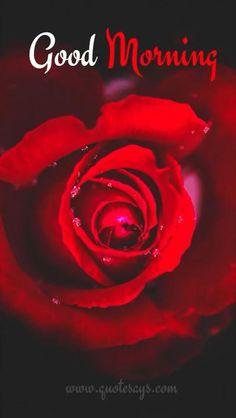 Good Night Flowers, Good Morning Beautiful Pictures, Good Morning Beautiful Flowers, Good Morning Nature, Good Morning Roses, Good Morning Images Flowers, Good Morning Image Quotes, Good Morning My Love, Good Morning Messages