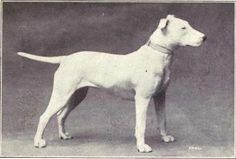 6 Dog Breeds That Have Changed Drastically Over Time