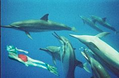 Done: swim with the dolphins