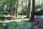 Plantation à Savannah