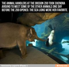 Animal Friends / iFunny :)