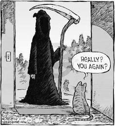 The Grim Reaper Comics And Cartoons Funny Cartoons, Funny Comics, Funny Cats, Funny Animals, Animal Memes, Haha Funny, Funny Memes, Hilarious, Funny Stuff
