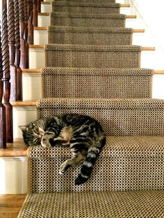 Cats love stairs!