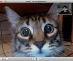 Cat recognizes owner in a video chat.