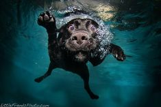 Pet photographer Seth Casteel of LittleFriendsPhoto captures hilarious underwater portraits of dogs as they jump into a swimming pool to fetch balls and toys.