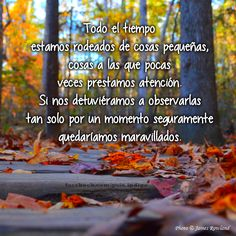 All the time we are surrounded by small things, things which we rarely pay attention to. If we would stop to watch them just for a moment surely we would be amazed. #frases