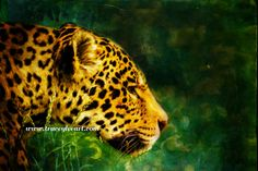 Jaguar in the Grass by Artist Tracey Lee Everington. Digital painting of a jaguar using Photoshop