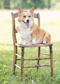 My Margie girl, 2016 Philly Area Corgi Picnic by Annmarie Young Photography