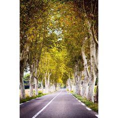 Yol bazen insana sonsuzluğu anımsatır. Ağaçlar içinden sonunu göremediğin bir sürprizdir bazen.  #uzaklaryakin #france #fransa  #marseille #marsilya  #road #cotedazur #aixenprovence #streetlife #objektifimden #travel #gezi #photography #photooftheday #photographers_tr #fotograf #europe #citylife #instagram #awesomeearth #seyahat #gezgin #macera #yolculuk #cokgezenlerkulubu #turkishfollowers #yol #instatravel #travelgram #instaturkey
