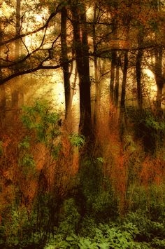 woodland lights by Andy 58, via 500px