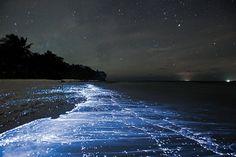 Fenômeno da bioluminescência resulta em 'mar de estrelas' em ilha das Maldivas
