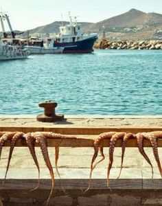 Octopus hanging out to dry in the port of Naoussa, Greece by callie