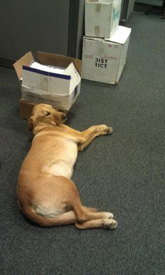 Buddy is helping out with returns!! We're always amazed by his ability to work while taking up as much floor space as possible :)