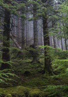 """wanderthewood: """"Forest near Loch Eck, Argyll and Bute, Scotland by Gordon Rafferty """""""