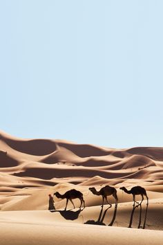 Tales of the Sands — dubainian: Erg Chebbi, Morocco Desert Photography, Travel Photography, Places To Travel, Places To Visit, Desert Places, Desert Dream, Japon Illustration, Islamic Pictures, Travel Aesthetic