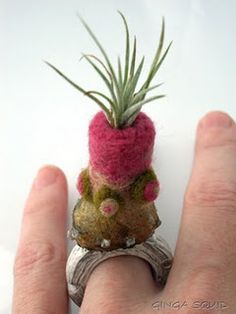 Ring with felted top and an air plant!!