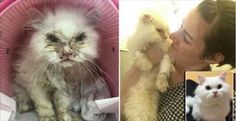 After Being Deemed 'Unadoptable, Jon Snow the Cat Now Lives a Happy Life!